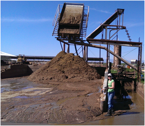 Betsy Karle (Dairy Program Representative, Glenn County) collecting flushed slurry (photo credit: Pramod Pandey)