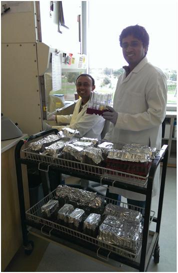 Pathogen testing in digested slurry: Sagor Biswas, Post-doctoral scholar (left), Pramod Pandey (right) (photo credit: Jacob Karcz)